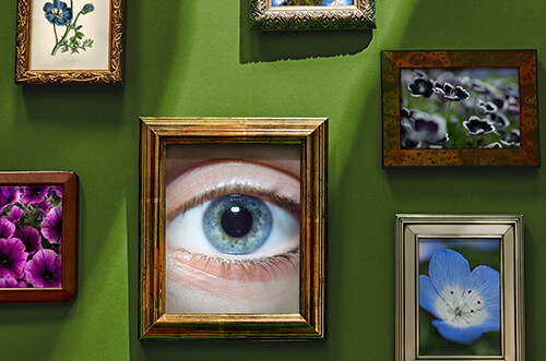 A family's hallway featuring photos of blue flowers and a center picture that is a close-up of a woman's blue eye